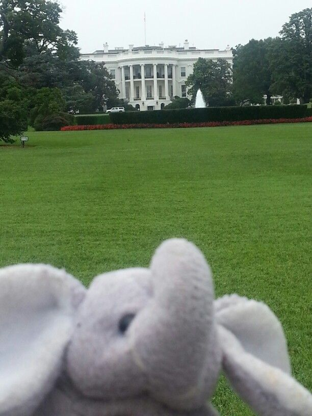 Biscuit at the White House