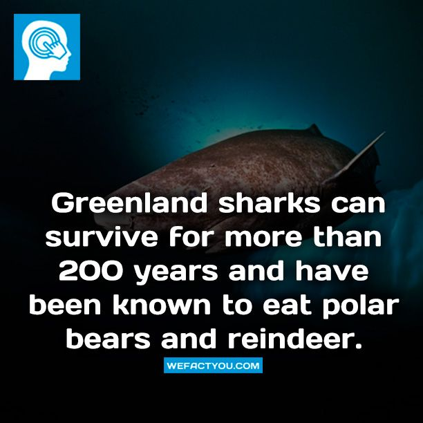 Greenland sharks can survive for more than 200 years and ...