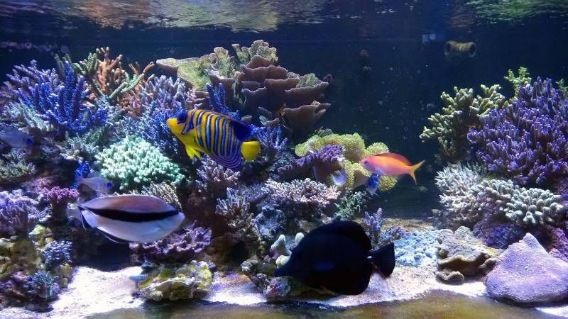 R Fish Marine Invertebrates Cs Tank Reef Shrimps Filters Refugium Sumppumps Food Best
