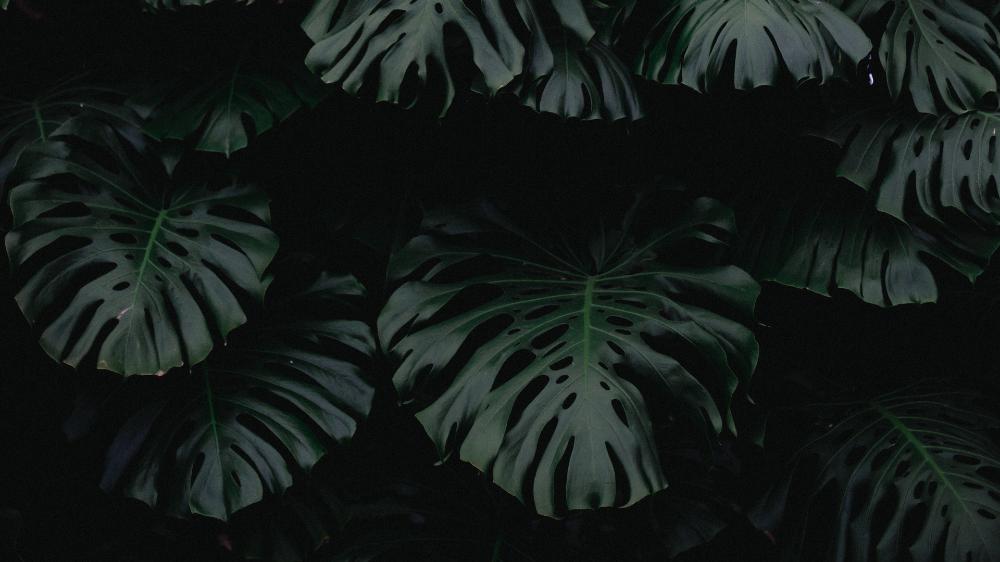 Download Wallpaper 1920x1080 Leaf Green Dark Plant Full Hd Hdtv Fhd 1080p Hd Background In 2020 Dark Wallpaper Plant Wallpaper Aesthetic Desktop Wallpaper