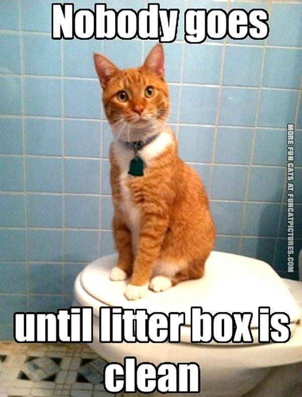 Pin By Colton M On Cats Cat Memes Clean Funny Cat Pictures Cat Jokes