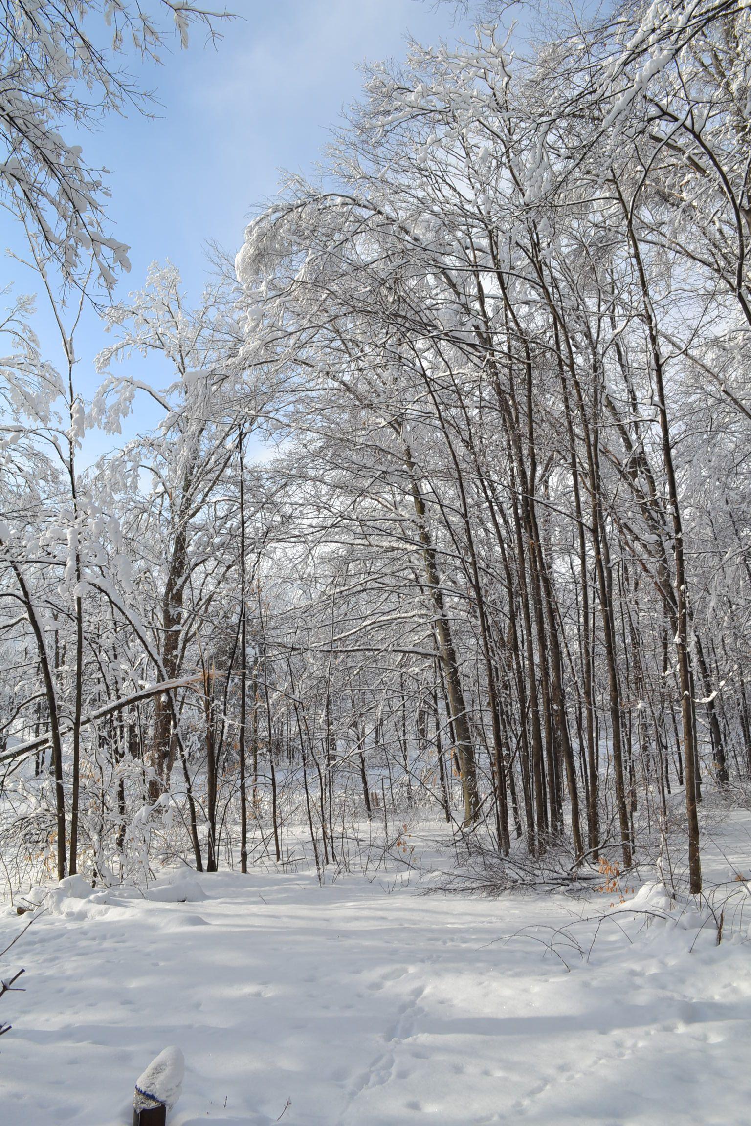 Winter up north michigan michigan outdoor winter