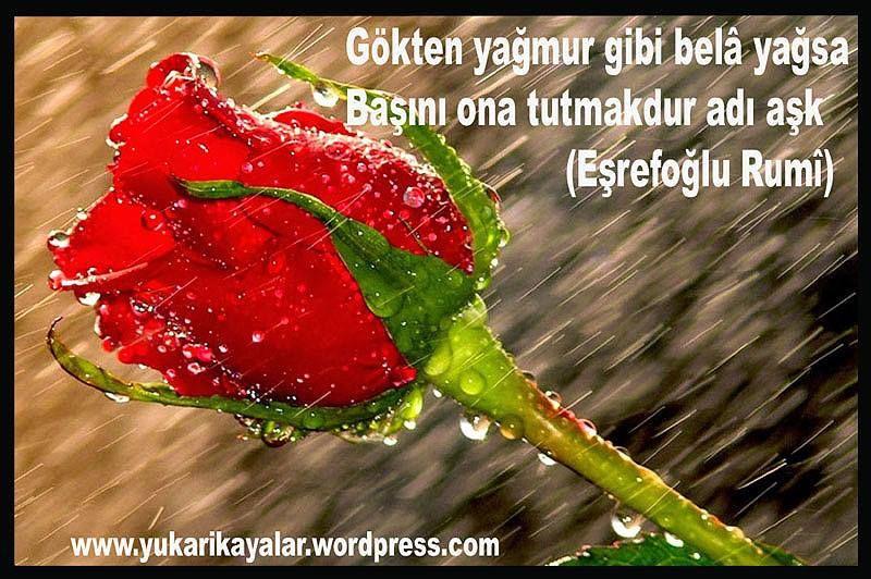 Posts From December 2 2015 On Goynem Beysehir Guller Cicek Siir