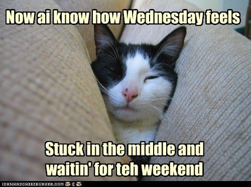 I Know How Wednesday Feels Funny Wednesday Memes Happy Wednesday Quotes Cute Memes