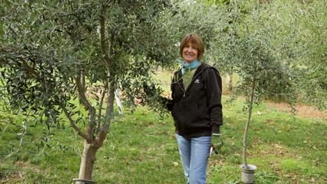 Growing Olives In Zone 7 Some Great Information Here They Recommend Mission And Arbequina Looks Like A Site For Info On Organic