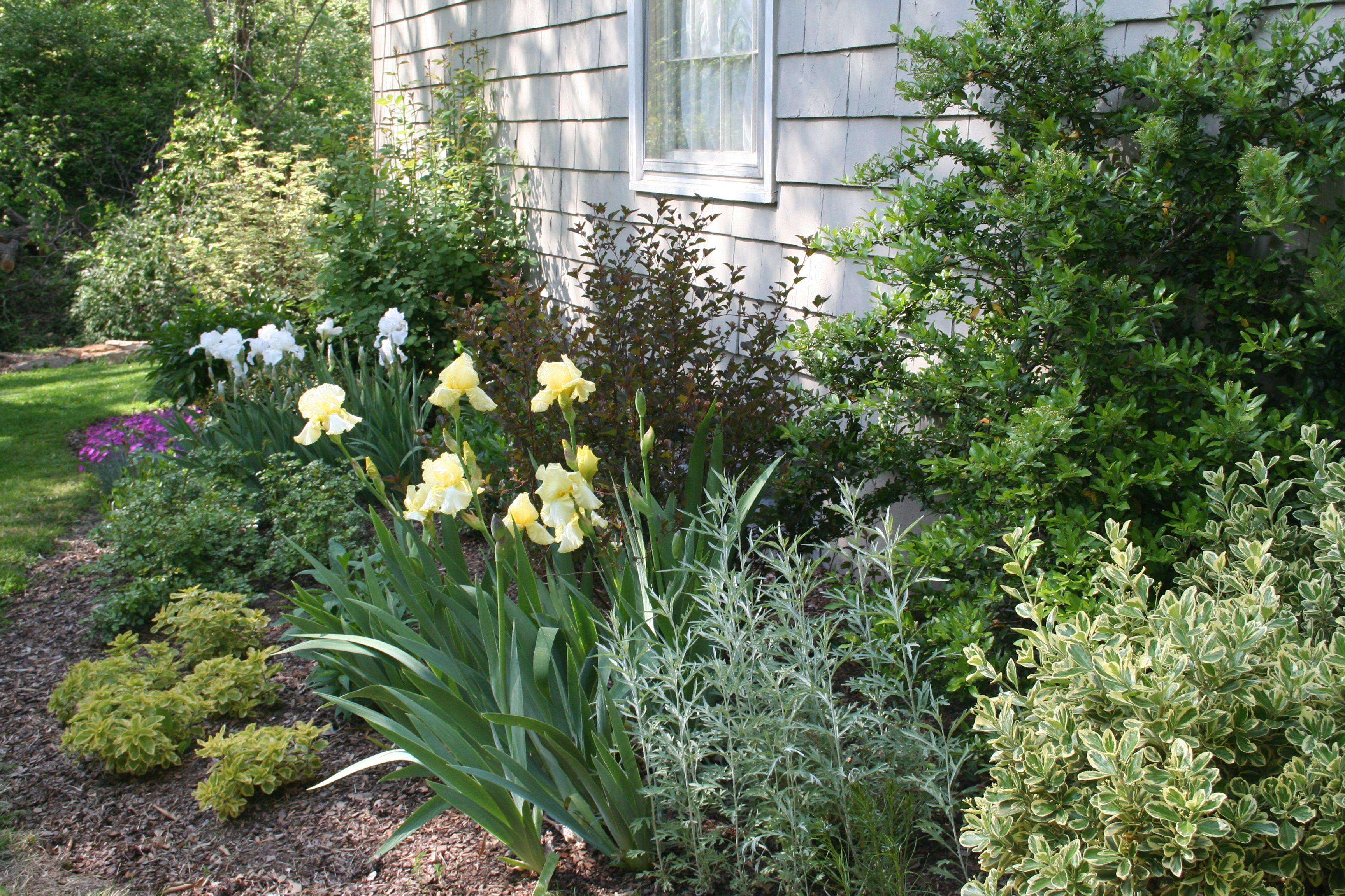 Million Designs perennial garden with yellow and white iris