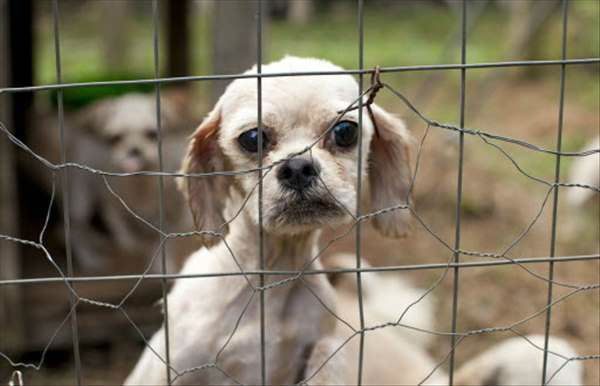 A Benefit To Support Puppy Mills Pets Puppies Puppy Mills