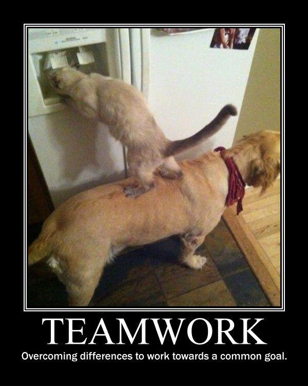 Google Image Result For Http Picchore Com Wp Content Uploads 2010 10 Teamwork Jpg Funny Animals Animals Friendship Animals Friends