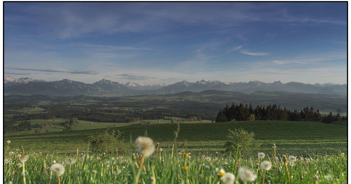 Gambar Pemandangan Padang Bunga Wallpaper Padang Rumput Bunga Liar Bidang Langit Daerah Download Pemandangan Padang Rumput Orang Di 2020 Pemandangan Bunga Gambar