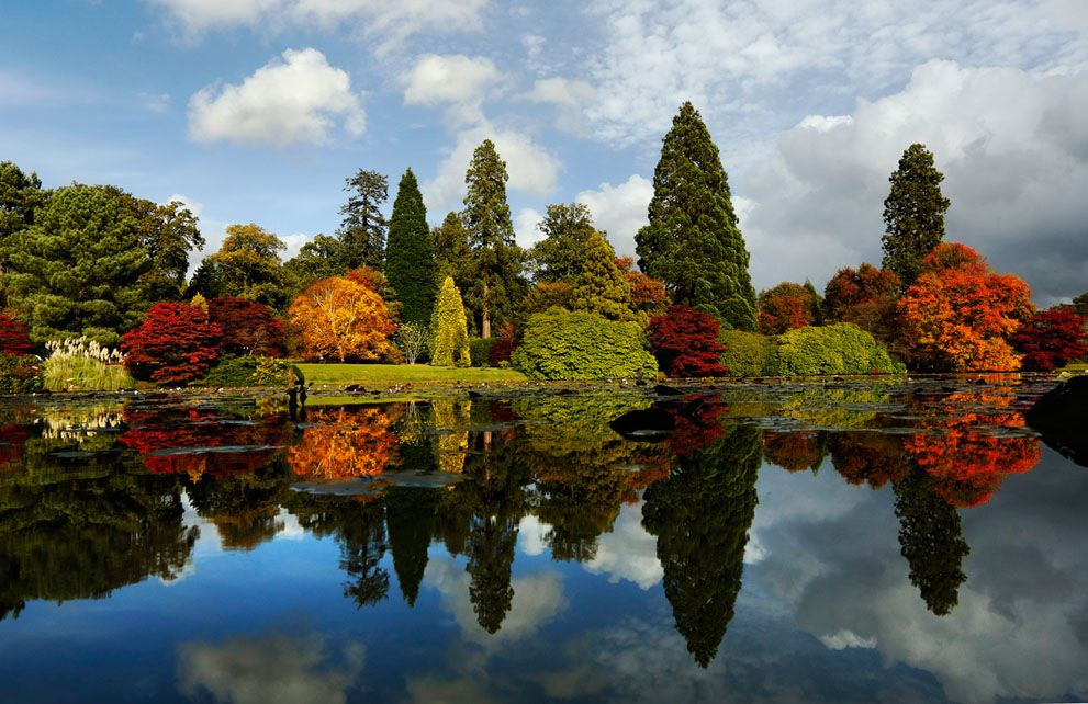 Changing autumn leaves, reflected in a pond in England's Sheffield Park Gardens, on October 17, 2012