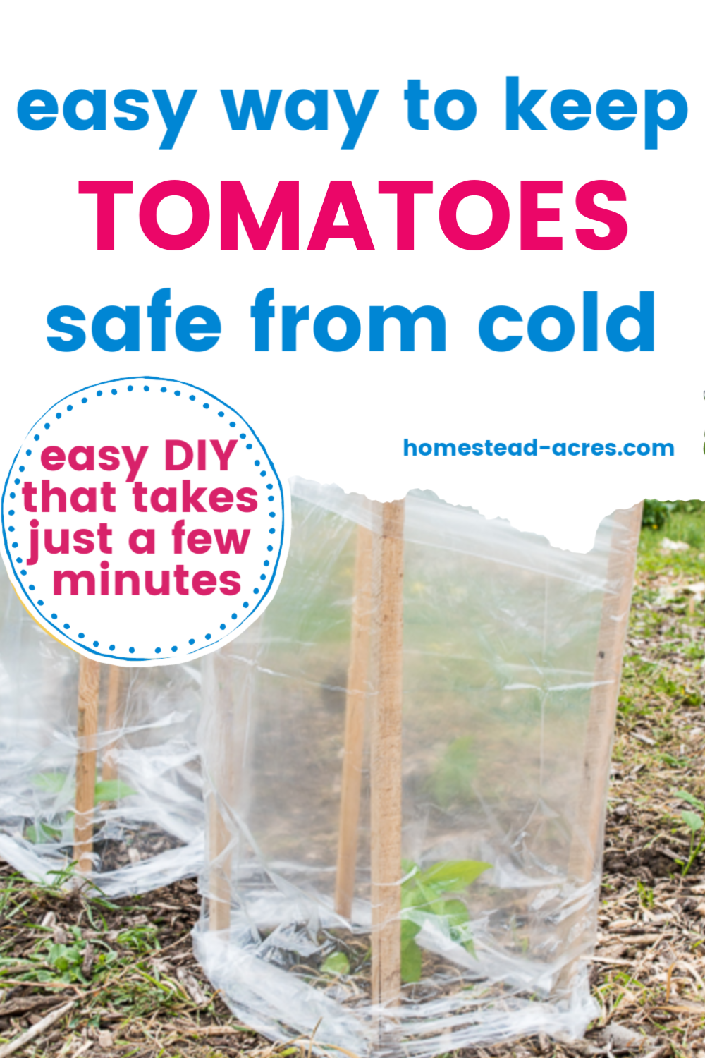 Easiest Way To Protect Pepper And Tomato Plants From The Cold is part of Tomato plants, Plant protection, Backyard vegetable gardens, Tomato, Pictures of spring flowers, Sustainable garden - Pepper and tomato plants don't grow well in cold spring temperatures  Get them off to a great start by protecting them from the cold with this easy trick