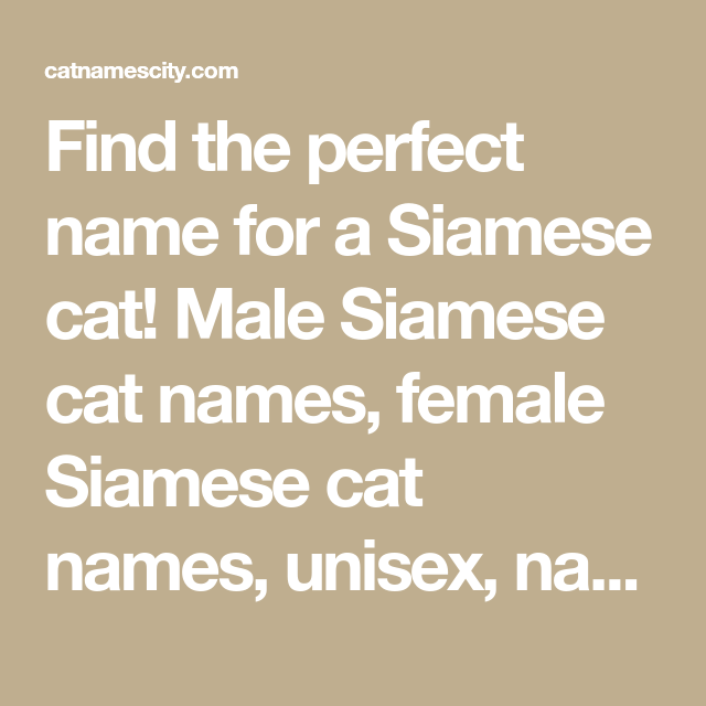 Siamese Cat Names Siamese Cats Cat Names Cute Cat Names