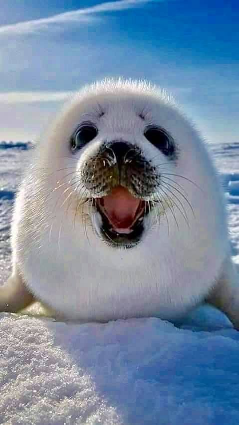 Pin by Ava Carroll on Adorable | Cute seals, Funny animals ...