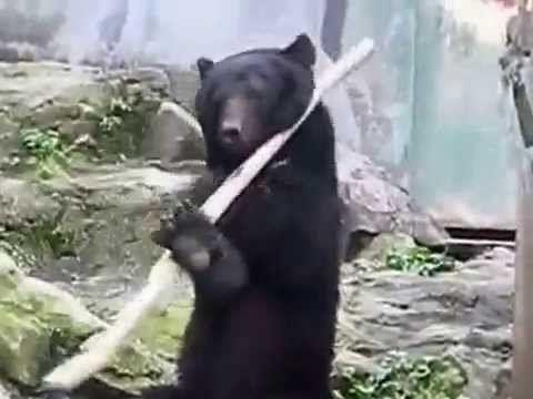 Original The real Kung Fu Panda https://www.havetime.ch