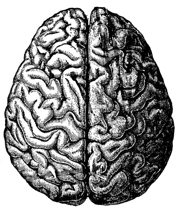 Free Vintage Brain Graphics