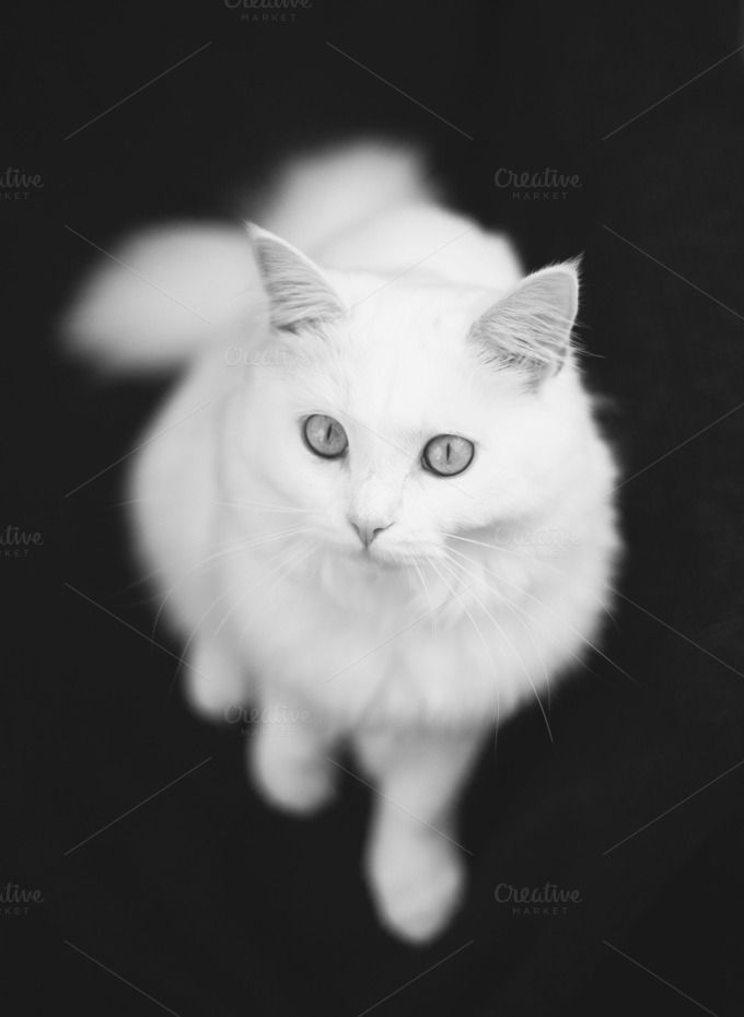 kitty in the studio by jkphotography on  creativemarket