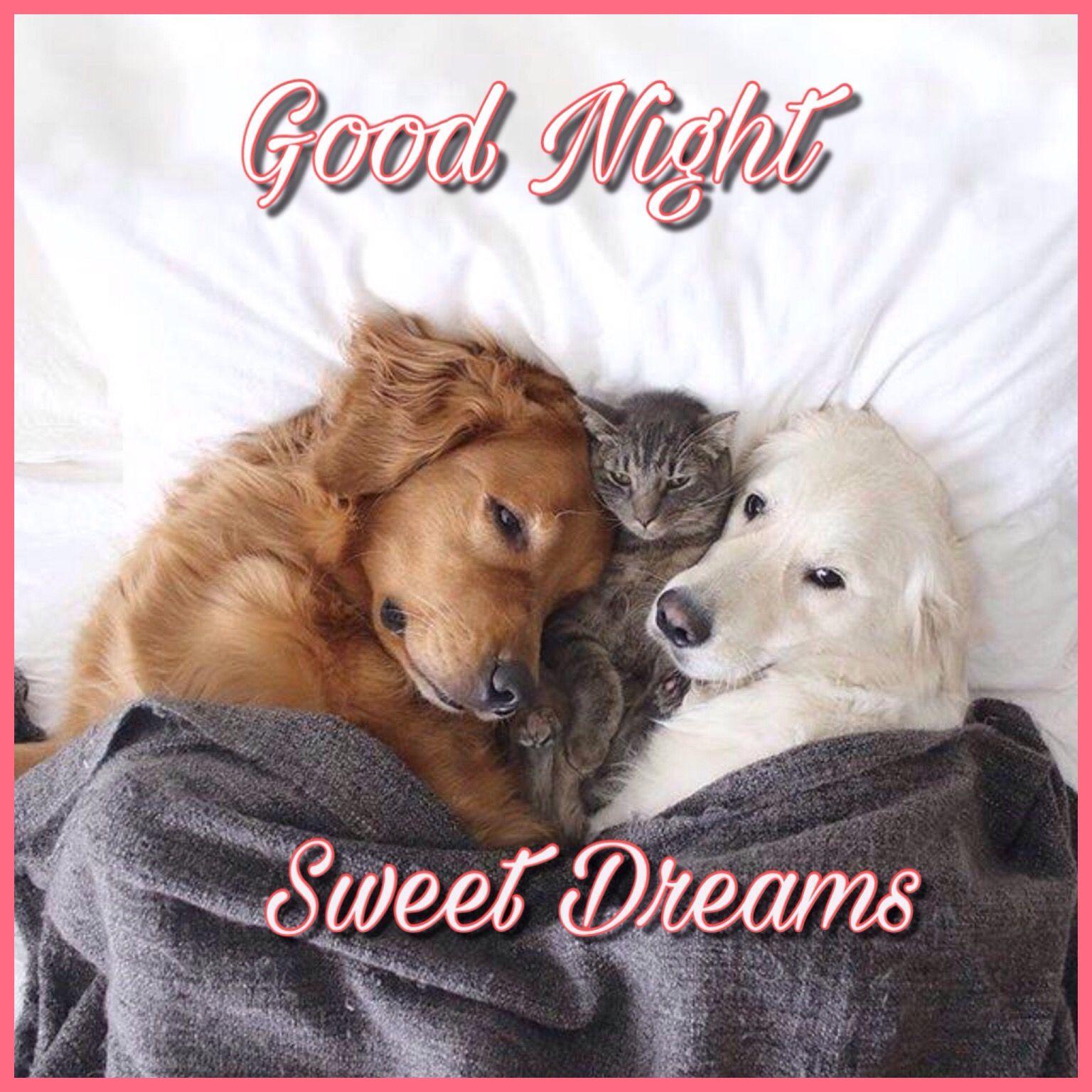 Pin Von Vanessa Auf Guten Abend Gute Nacht Gute Nacht Hunde Nacht