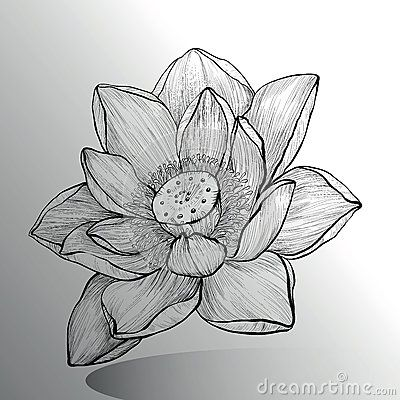 Lotus Flower Sketch Flower Sketches Flower Drawing Design Lotus Flower Drawing