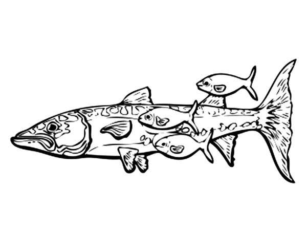 Barracuda Fish And Remora Fishes Coloring Pages Best Place To Color Fish Coloring Page Coloring Pages Coloring Pictures