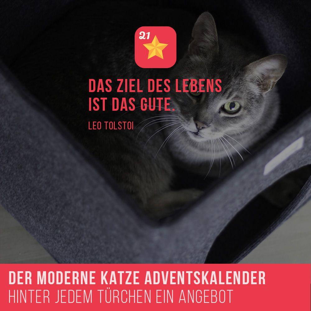 Weihnachtskalender Angebote.Der Moderne Katze Adventskalender Hinter Jedem Türchen Ein Angebot