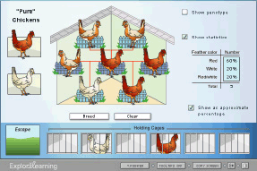 Lesson Info: Chicken Genetics Gizmo | ExploreLearning ...
