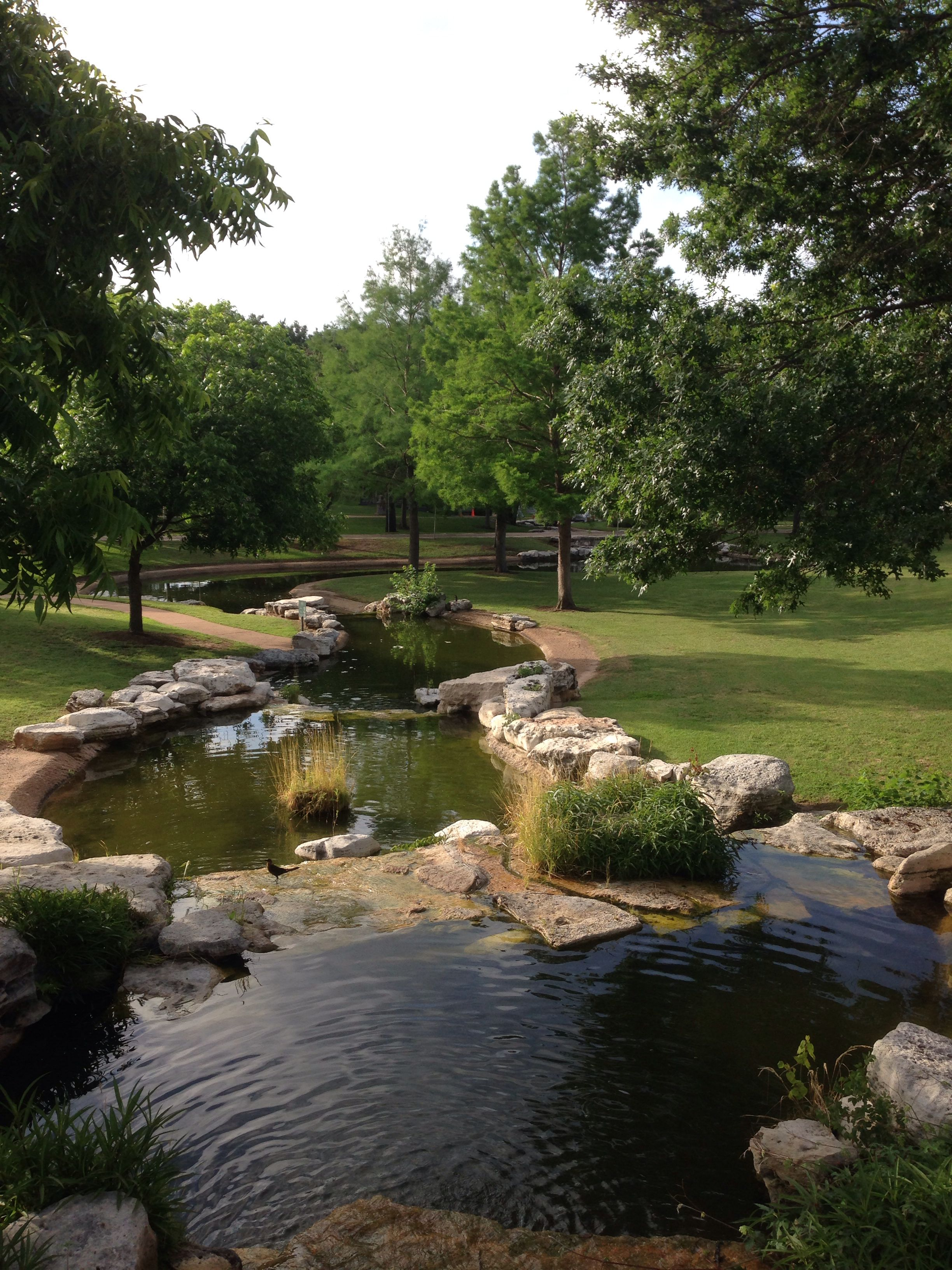Austin Texas Backyard water feature, Water garden