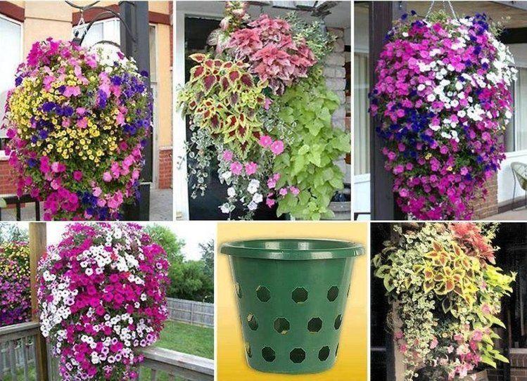 Pomysly Oraz Aranzacje Do Ogrodu Strona 31 Hanging Flower Baskets Garden Projects Plants