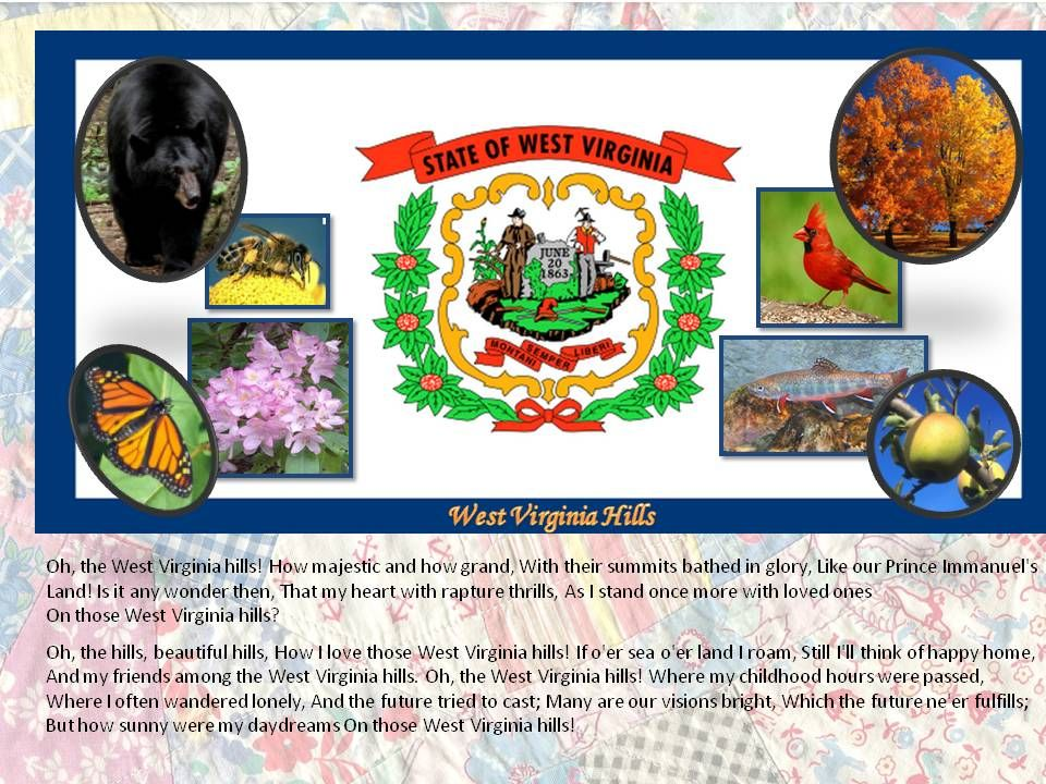West Virginia State Symbols My West Virginia My Home Pinterest