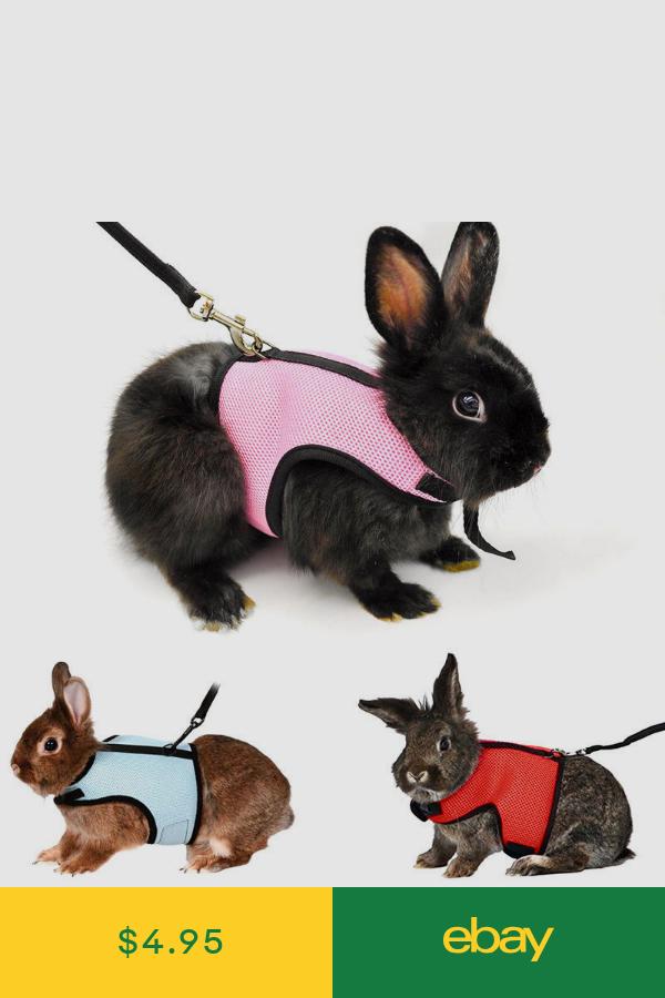 Collars Leads Harnesses Pet Supplies Ebay Cute Hamsters Pet