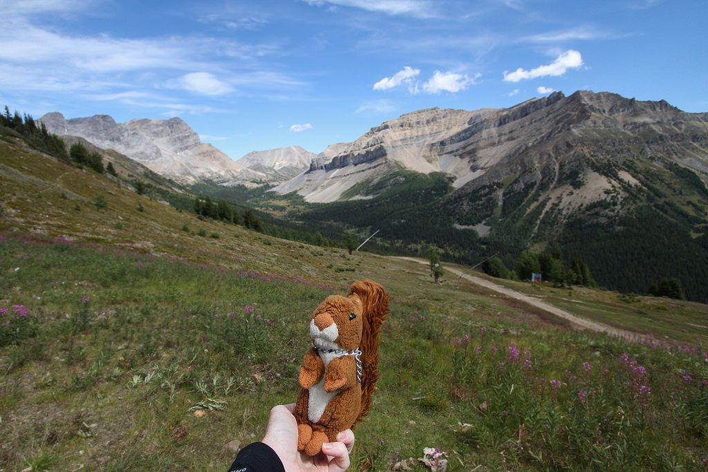 https://flic.kr/p/xASWgT   Lake Louise   View from the Lake Louise ski resort. #mascot #mascotte #travelingmascot #travellingmascot #DexterLEcureuil #DexterTheSquirrel #peluche #stuffedanimal #Canada