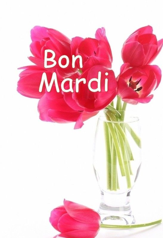Bon Mardi Bon Mardi Humour Calendrier Des Fetes Bon Mardi