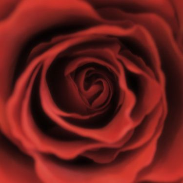 Perfect for your Valentine. NEW Photographic Art Print For Sale: Heart Of A Red Rose Square