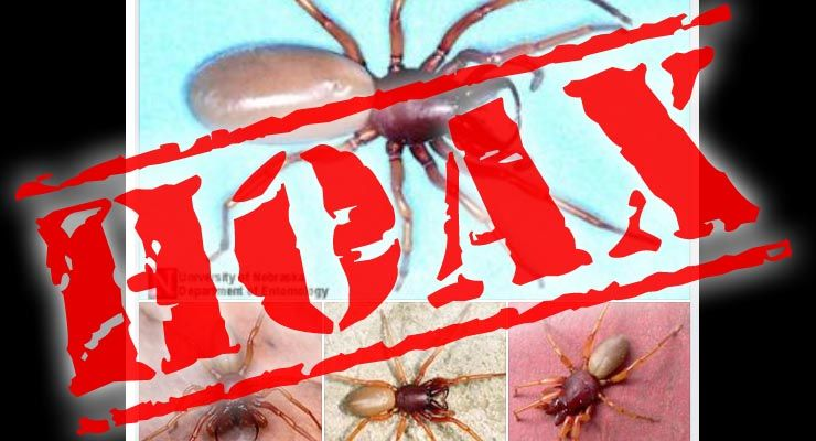 Is a new deadly spider spreading across the USA? Fact