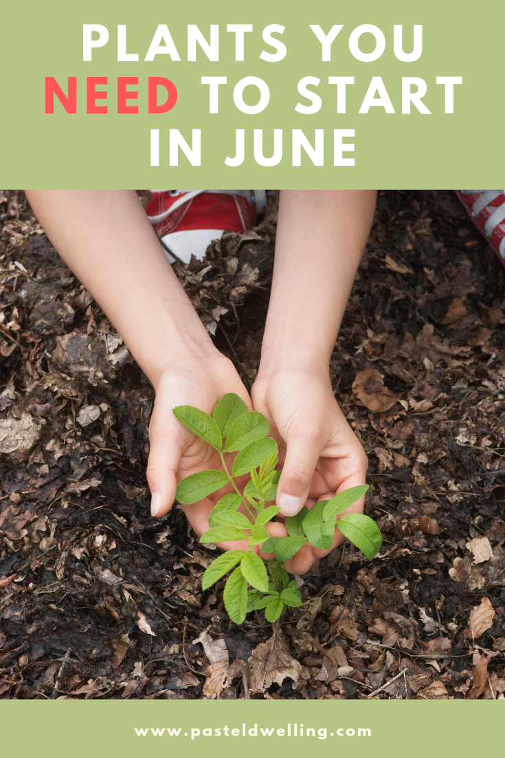 Plants To Sow And Grow In June Starting A Garden Planting Seeds Outdoors Plants