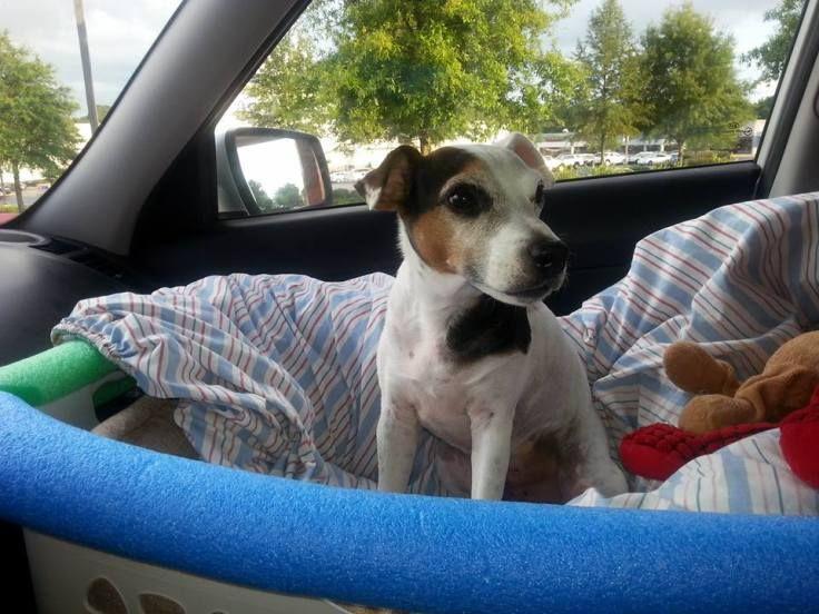 Diy front seat dog car seat pinterest dog car seats dog car and dog diy front seat dog car seat solutioingenieria Gallery