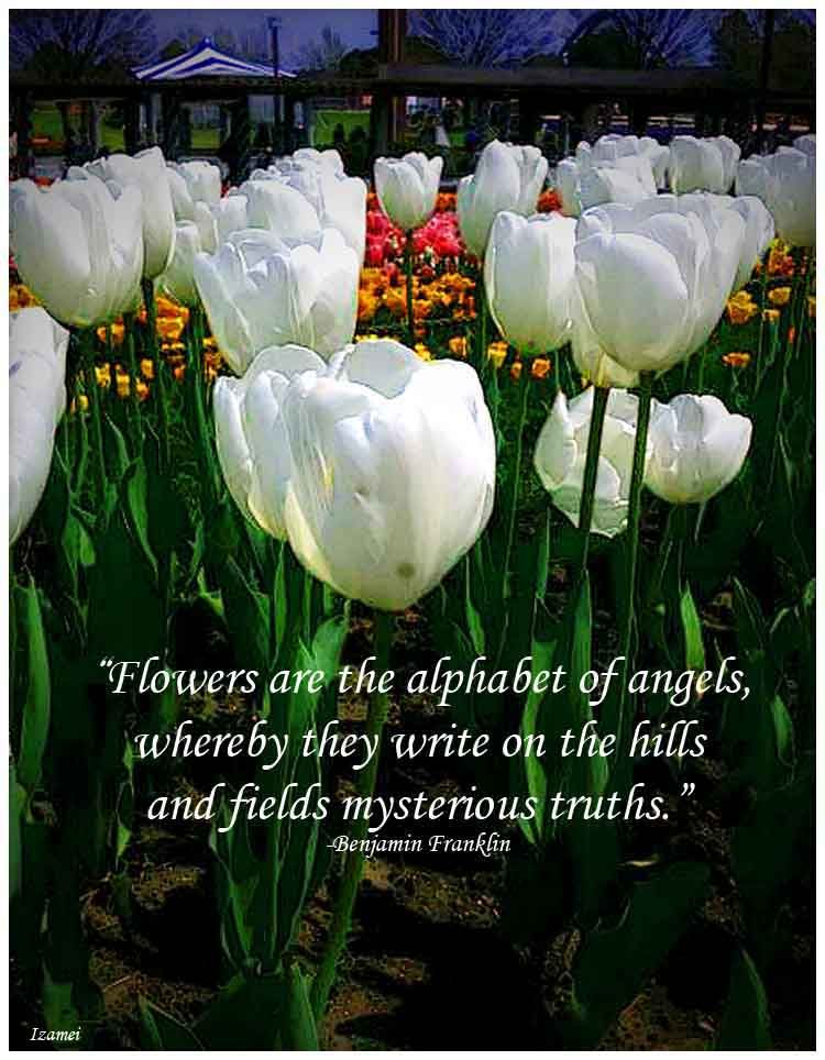 Tulip Quotes Google Search Garden Tulips Quotes