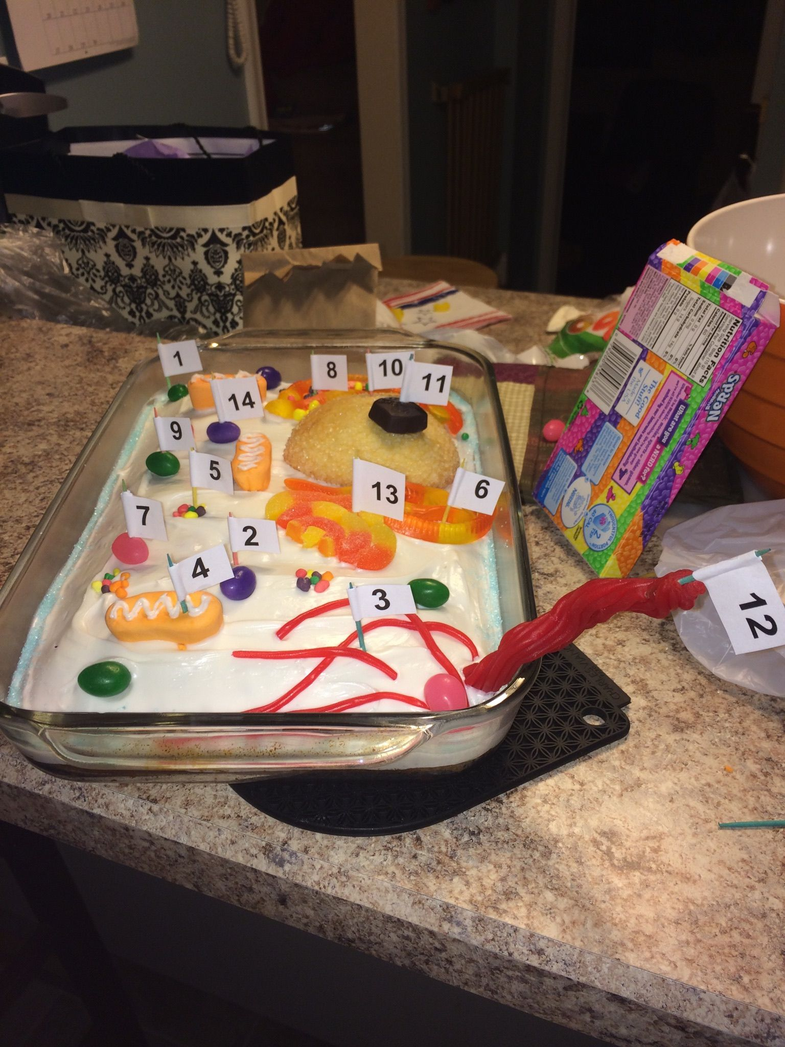 Animal Cell Model Cake 1 Membrane Sprinkles 2 Cytoplasm Icing