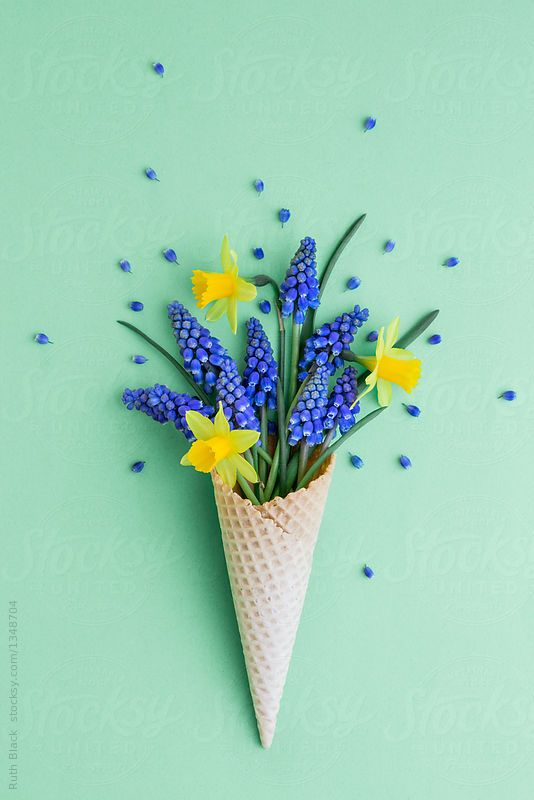 Stocksy United   Royalty Free Stock Photos   Wafer cone with spring flowers  by Ruth. Stocksy United   Royalty Free Stock Photos   Wafer cone with