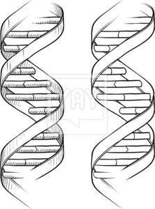 Dna Double Helix Sketch With Images Dna Tattoo Helix Tattoo