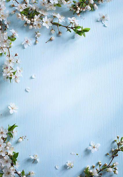 Art Spring Border Background With White Blossom Design