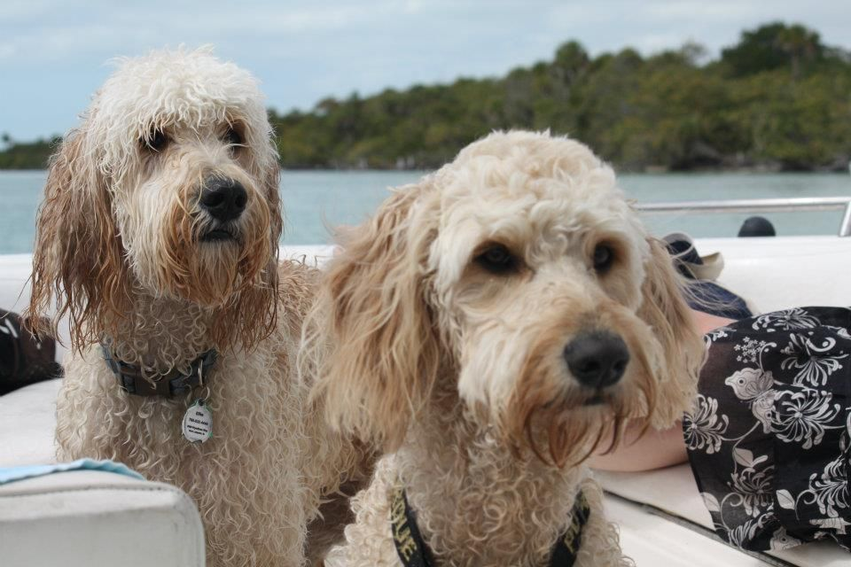 Howie and Ellie living it up in Florida (With images