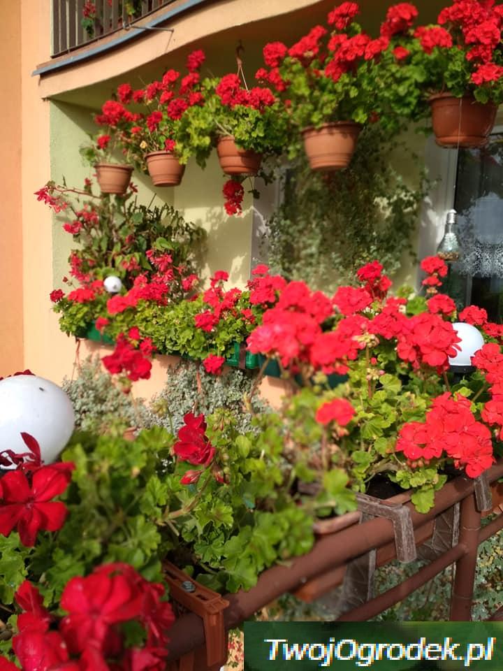 Balkonowe Inspiracje Dla Kazdego Plants