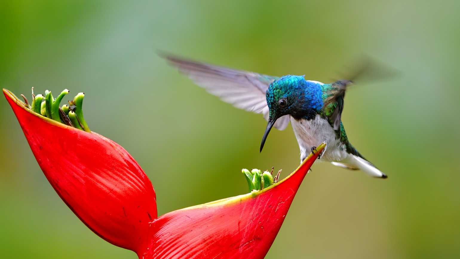 42++ What time do hummingbirds feed ideas in 2021