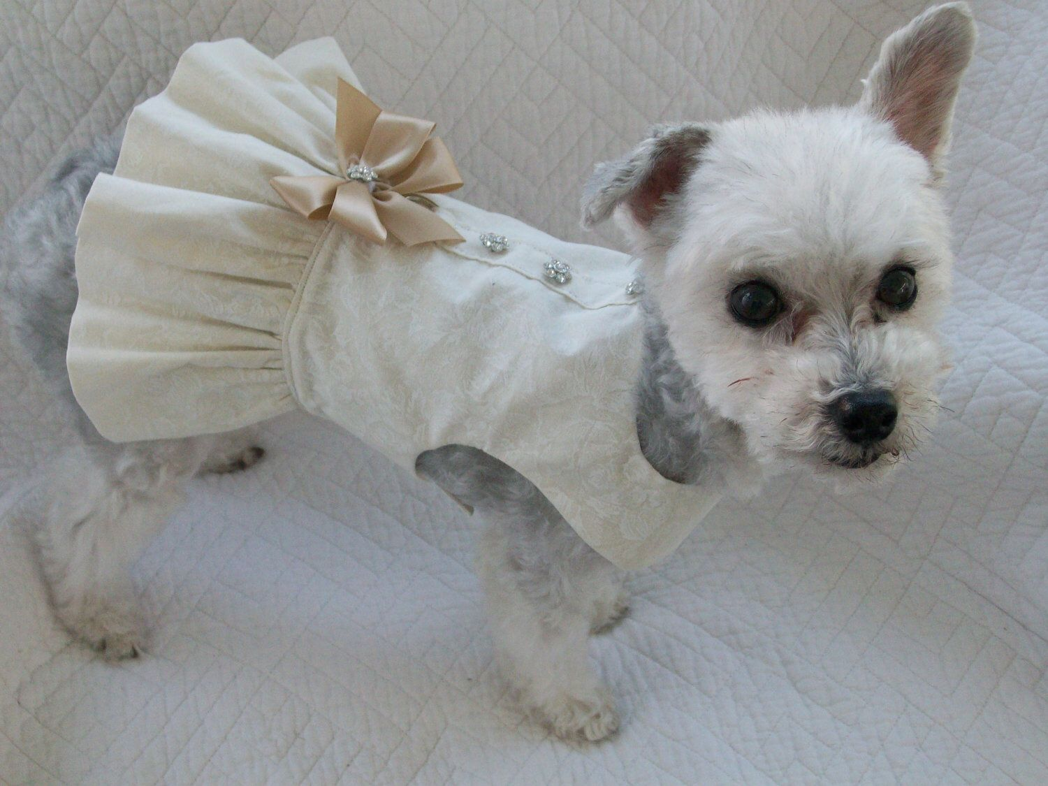 Cat in wedding dress  Wedding Dog Dress Harness for Dog or Cat Outfit by graciespawprints