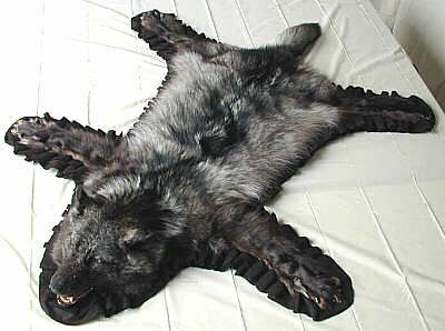 Wolf Skin Rug   Google Search