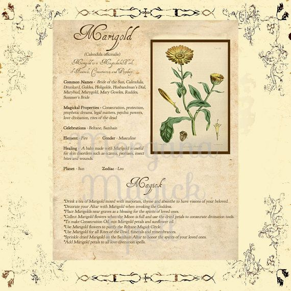 MARIGOLD MAGICK HERB For Witchcraft Book of Shadows - Instant