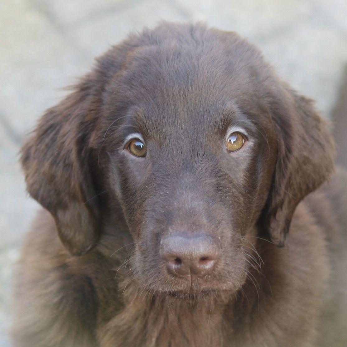 Kennel Bel Ami Belge 犬