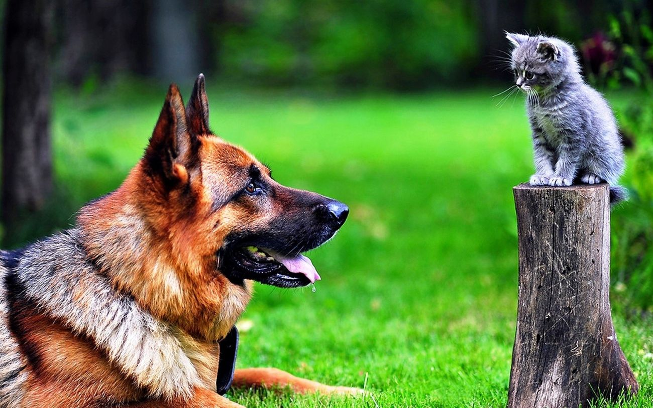 Download Cat and Dog Wallpaper for Samsung Galaxy High