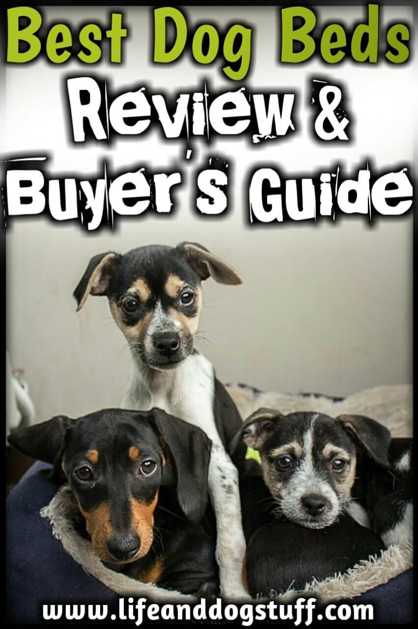 Top 5 Best Dog Beds Review And Buyer S Guide Cool Dog Beds Cute Dog Beds Dog Bed