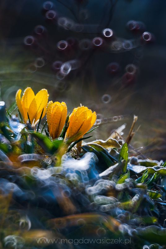 Flowers. Magda Wasiczek
